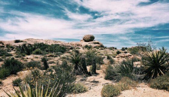ラスベガスは砂漠